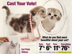 Cat Fancy Survey